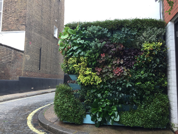 Sky Green Designs exterior living wall