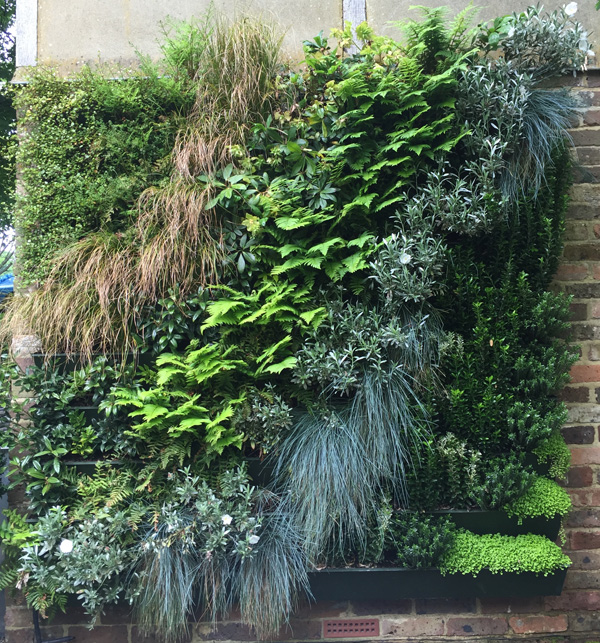 Green Walls or living walls and vertical gardens